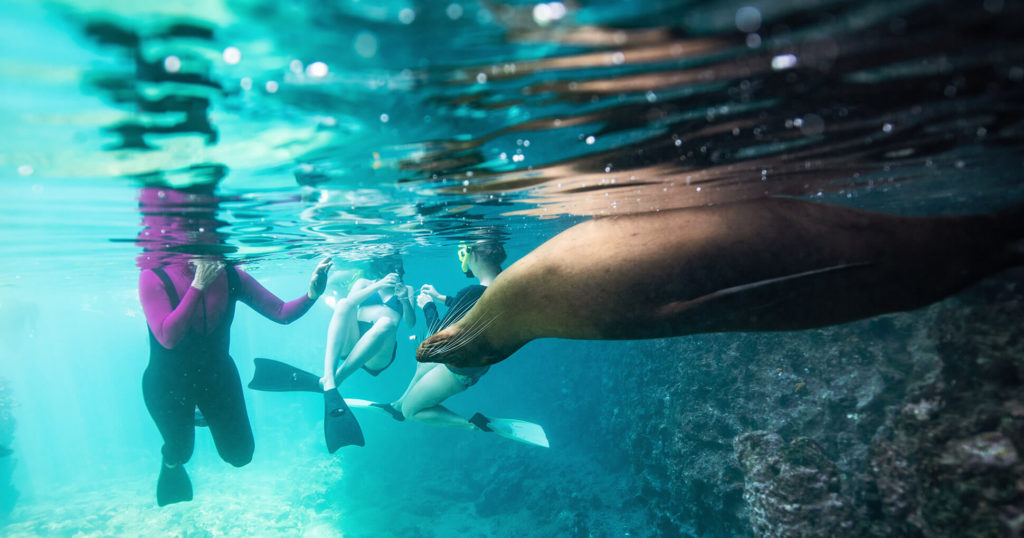 Underwater life in the Galapagos