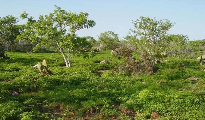Galapagos Islands' hot season