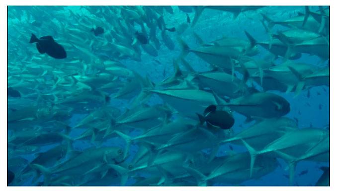 Galapagos unique marine life