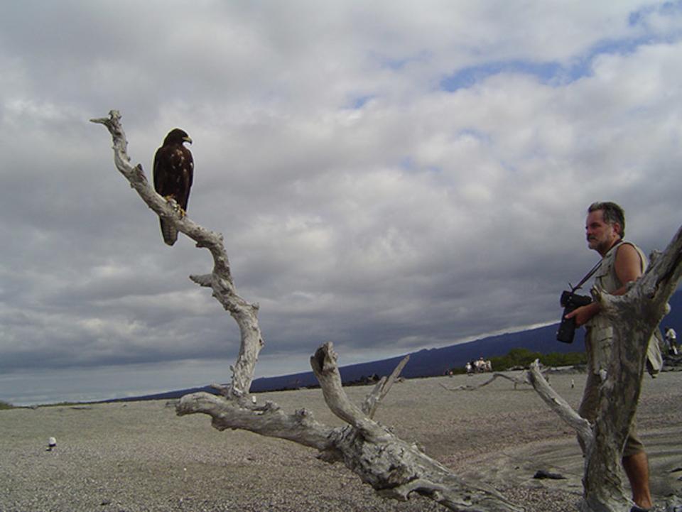 Best Bird Sightings in the Galapagos