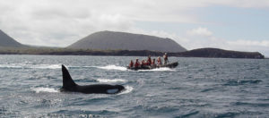 Whales from the Galapagos