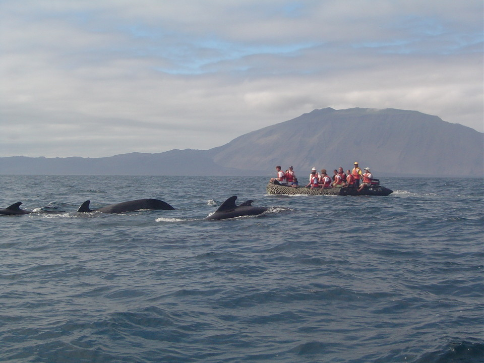 A group of whales in the Galapagos islands