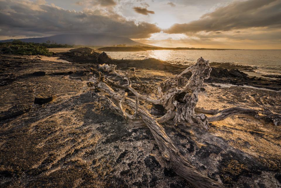 Fernandina Island
