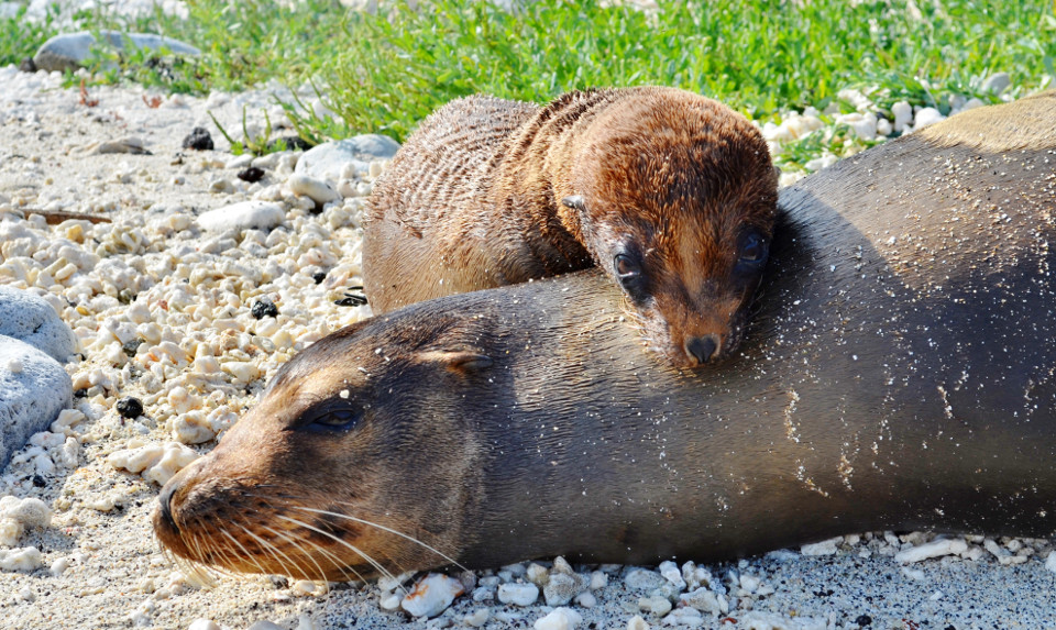 Mother sea lion and pup