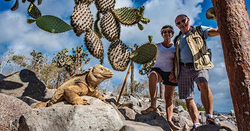 Santa Fe Iguana, Galapagos Islands