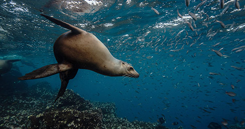 Sea lion at Champion Islet, Galapagos Islands