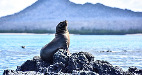 Sea lion at Eden islet