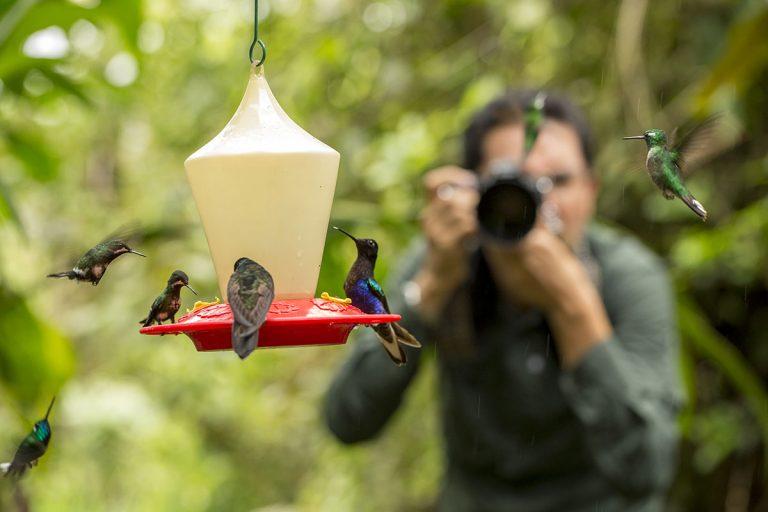Hummingbirds at Mashpi Lodge