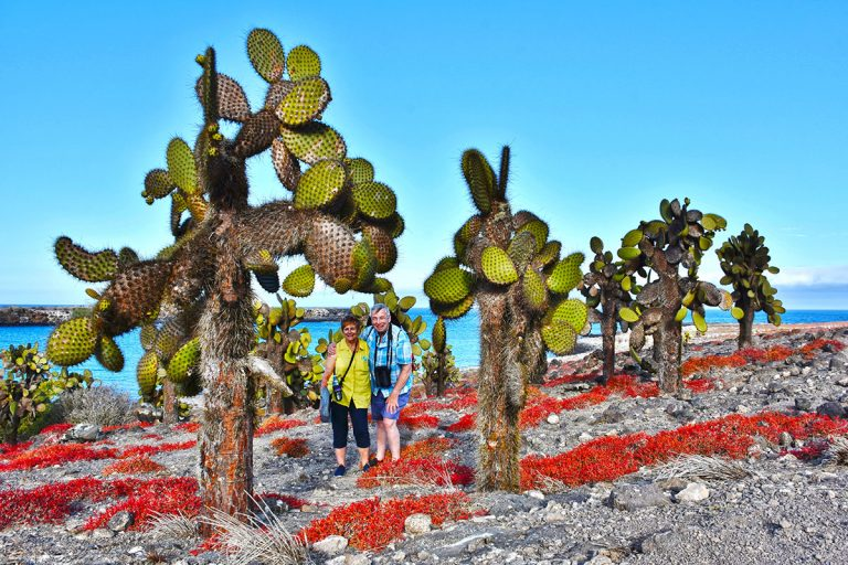 South Plaza's prickly pear cactus