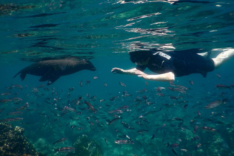 Snorkeling with Galapagos sea lions