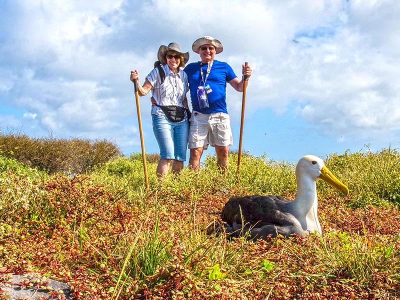 Galapagos Albatross in Española Island